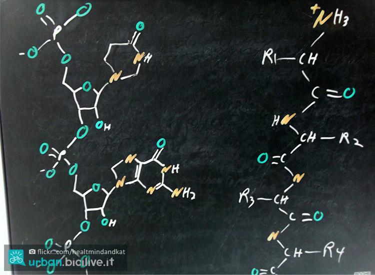 struttura delle proteine e aminoacidi