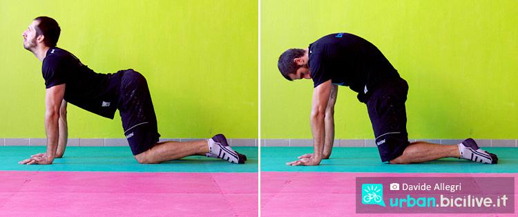 posizione del gatto per allungare la colonna vertebrale